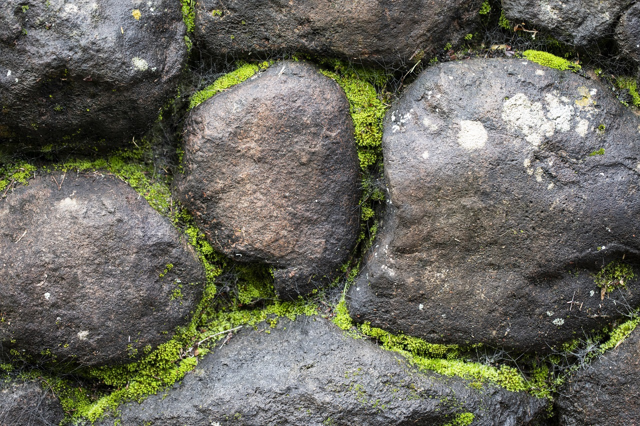 moss on an old stone wall