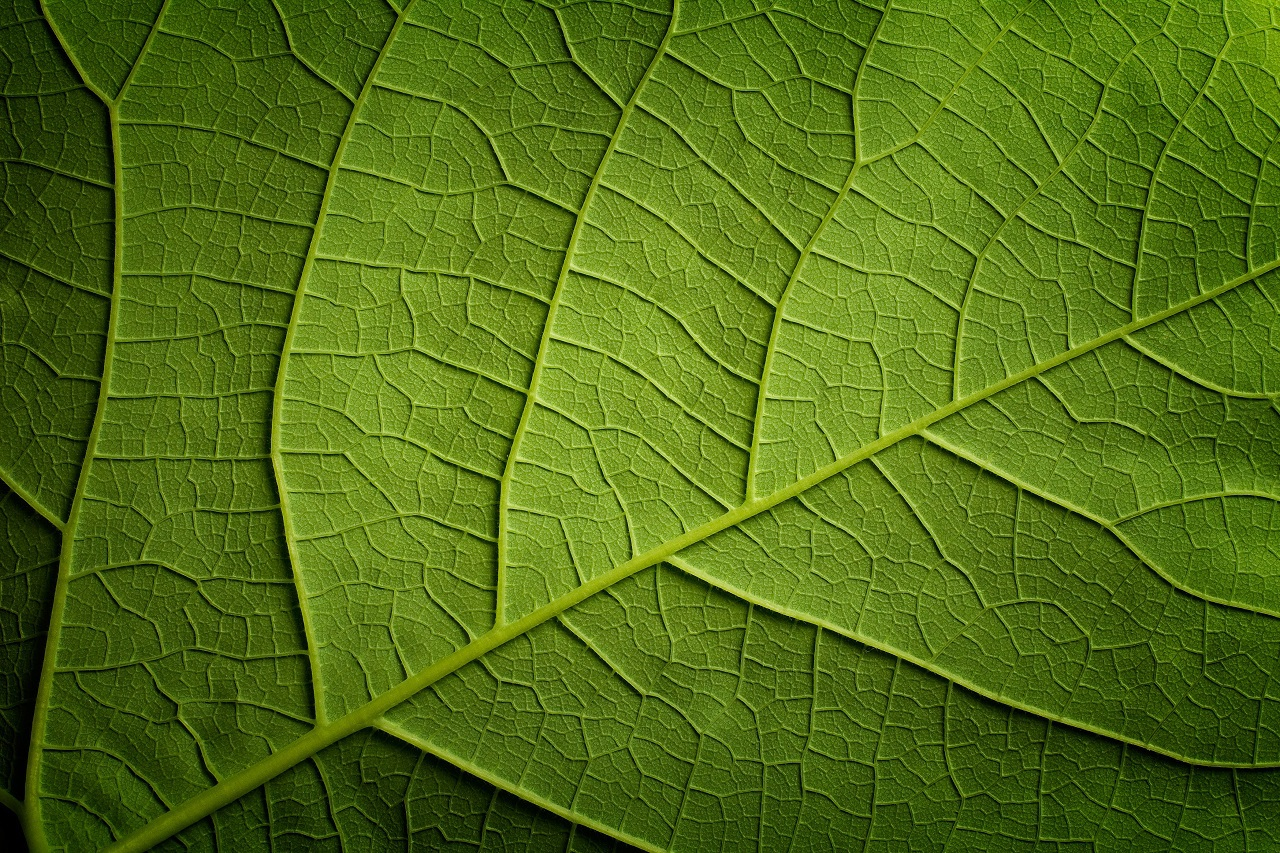 Green leaf closeap background