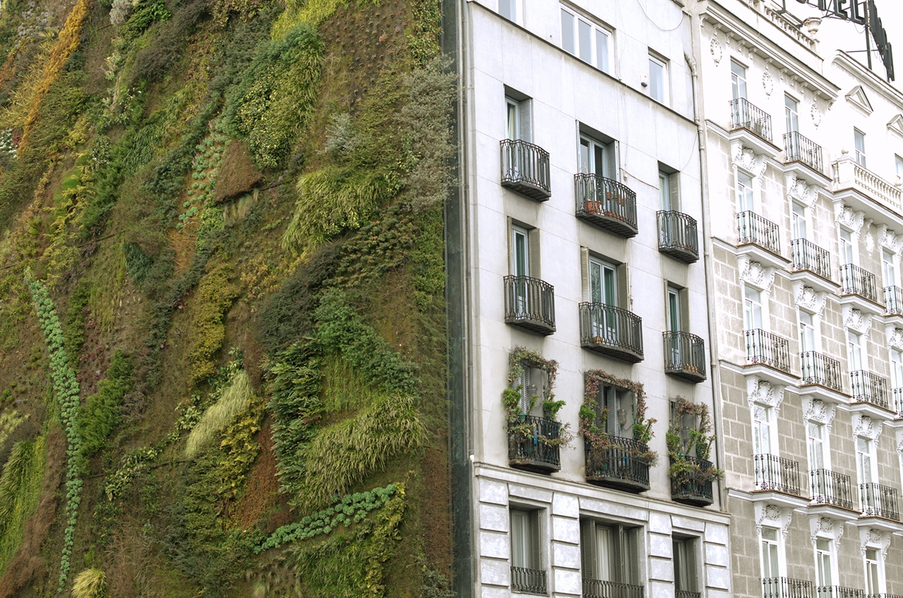 ecological urban construction. plants on the wall.