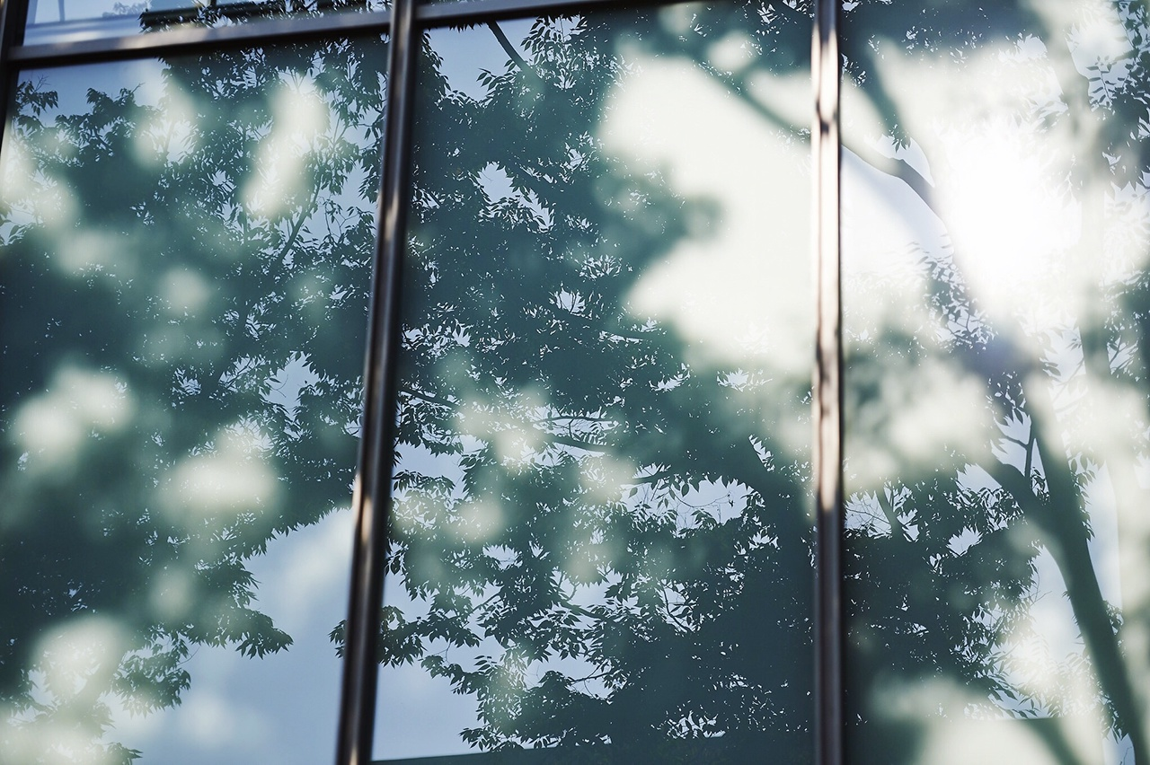 Reflection Of Tree On Glass Window