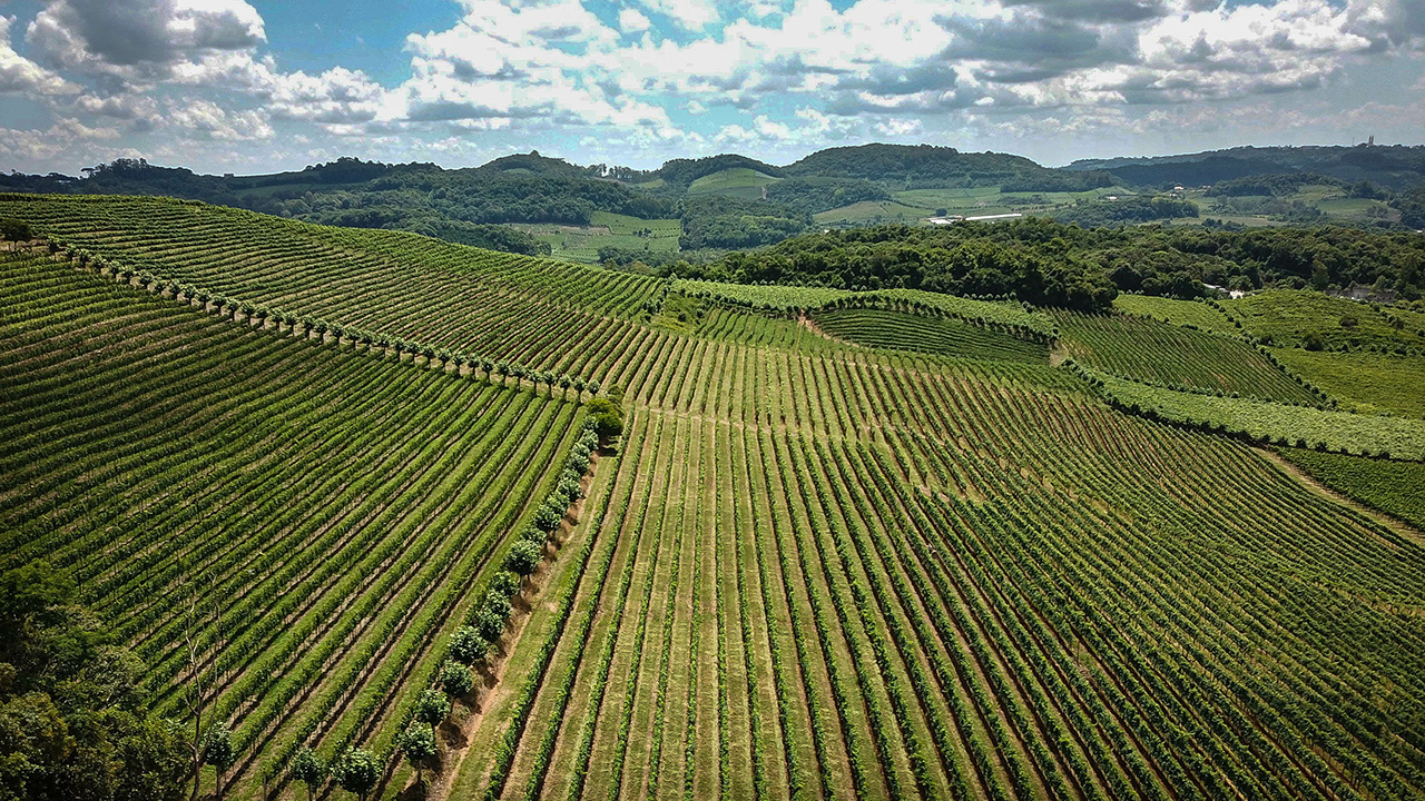 Aerial view of the valley of the vineyards in Bento Gonçalves, in the Serra Gaúcha, Brazil