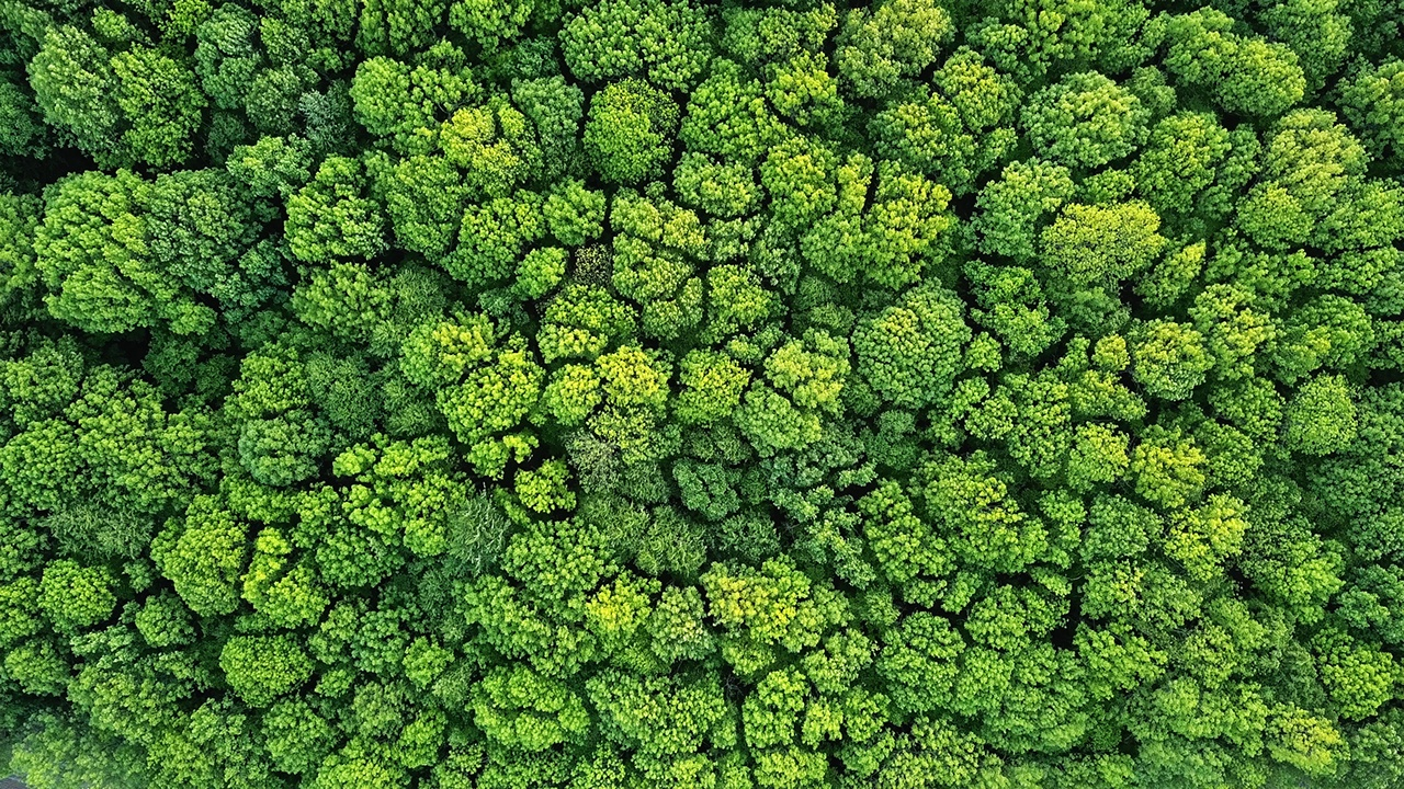 Aerial view green forest foliage summer warm sunlight. Natural green background. Photo by drone
